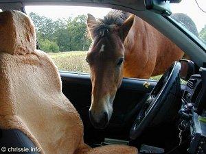 Reistport / Reiten / Reiterbedarf : Pferd